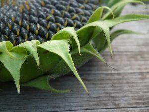 Brotaufstrich auf Basis von Sonnenblumenkernen